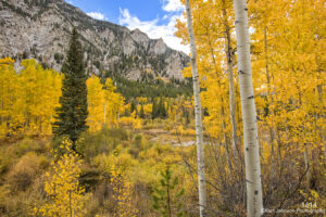 landscape fall color mountains birch trees pine stream colorado