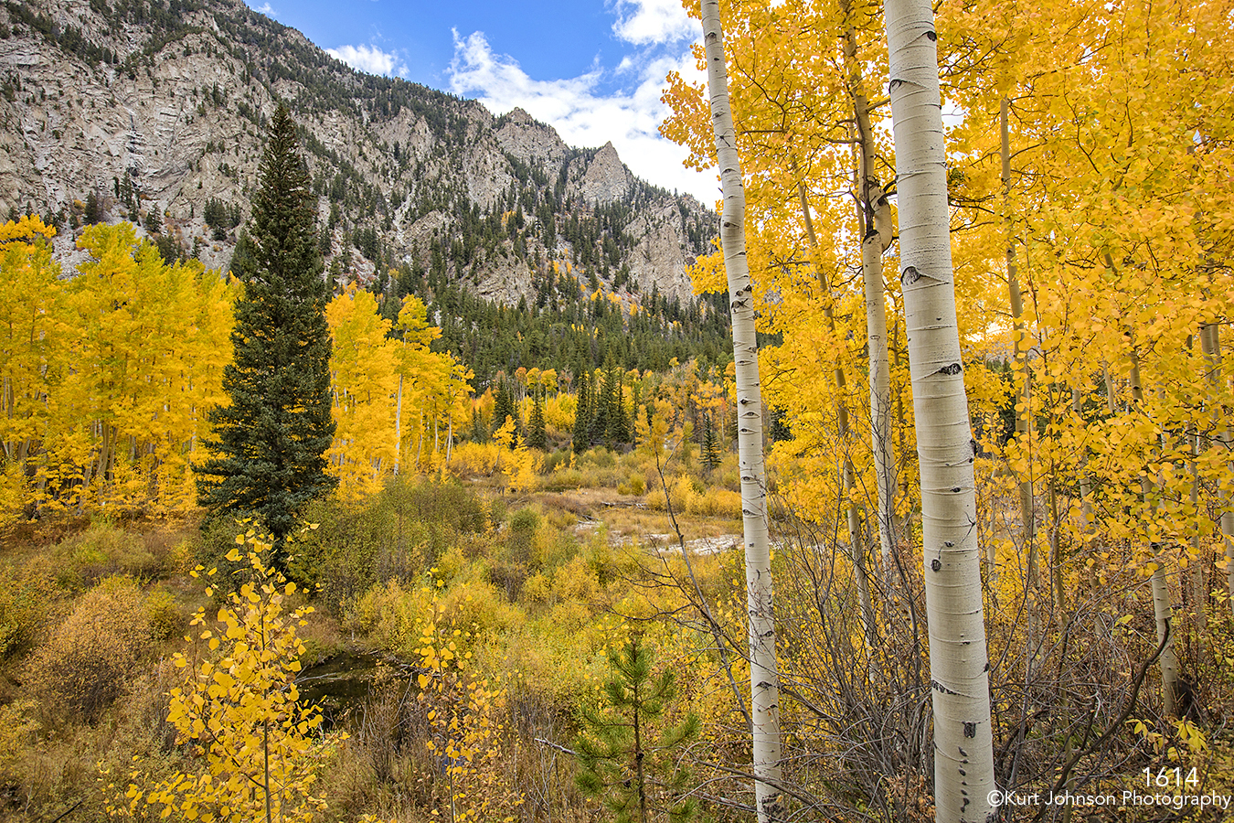 landscape fall color mountains birch trees pine stream colorado