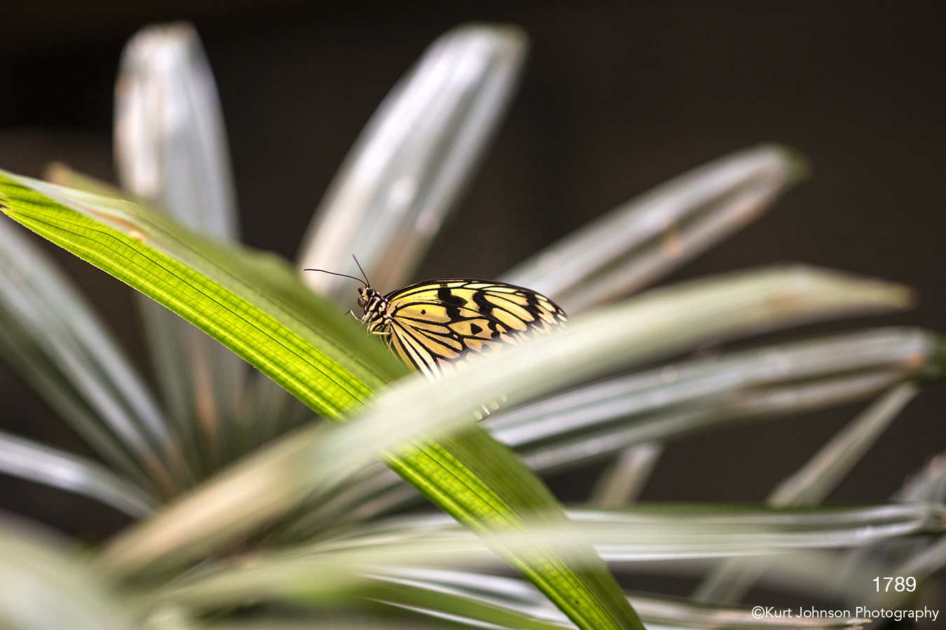 wildlife butterfly yellow green grasses