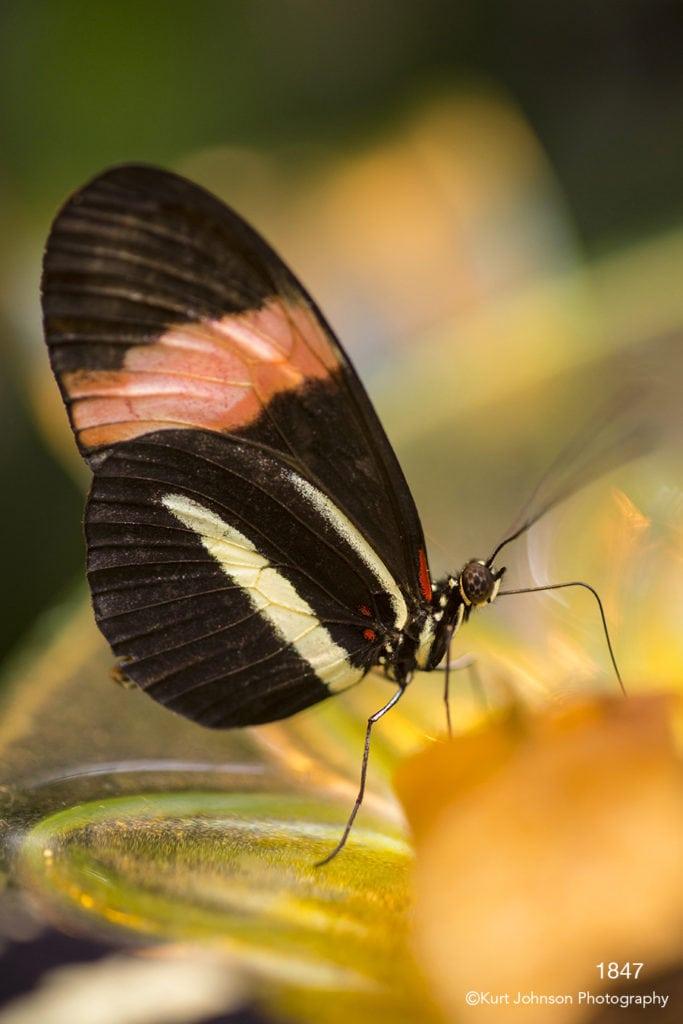 wildlife butterfly bug