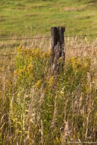 landscape grasses earthtones fence