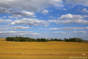 landscape field crops clouds trees gold yellow