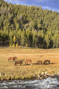 landscape trees pine grasses stream wildlife horses water