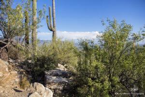 landscape desert grasses cactus green
