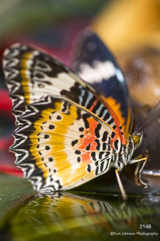 wildlife butterfly orange close up detail