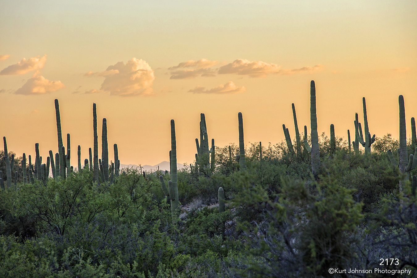 landscape desert grasses cactus green sunset clouds