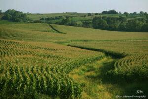 landscape fields crops corn rural