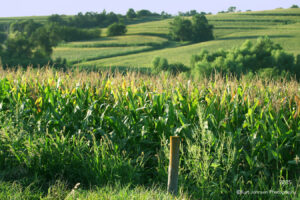 landscape fields crops corn rural fence