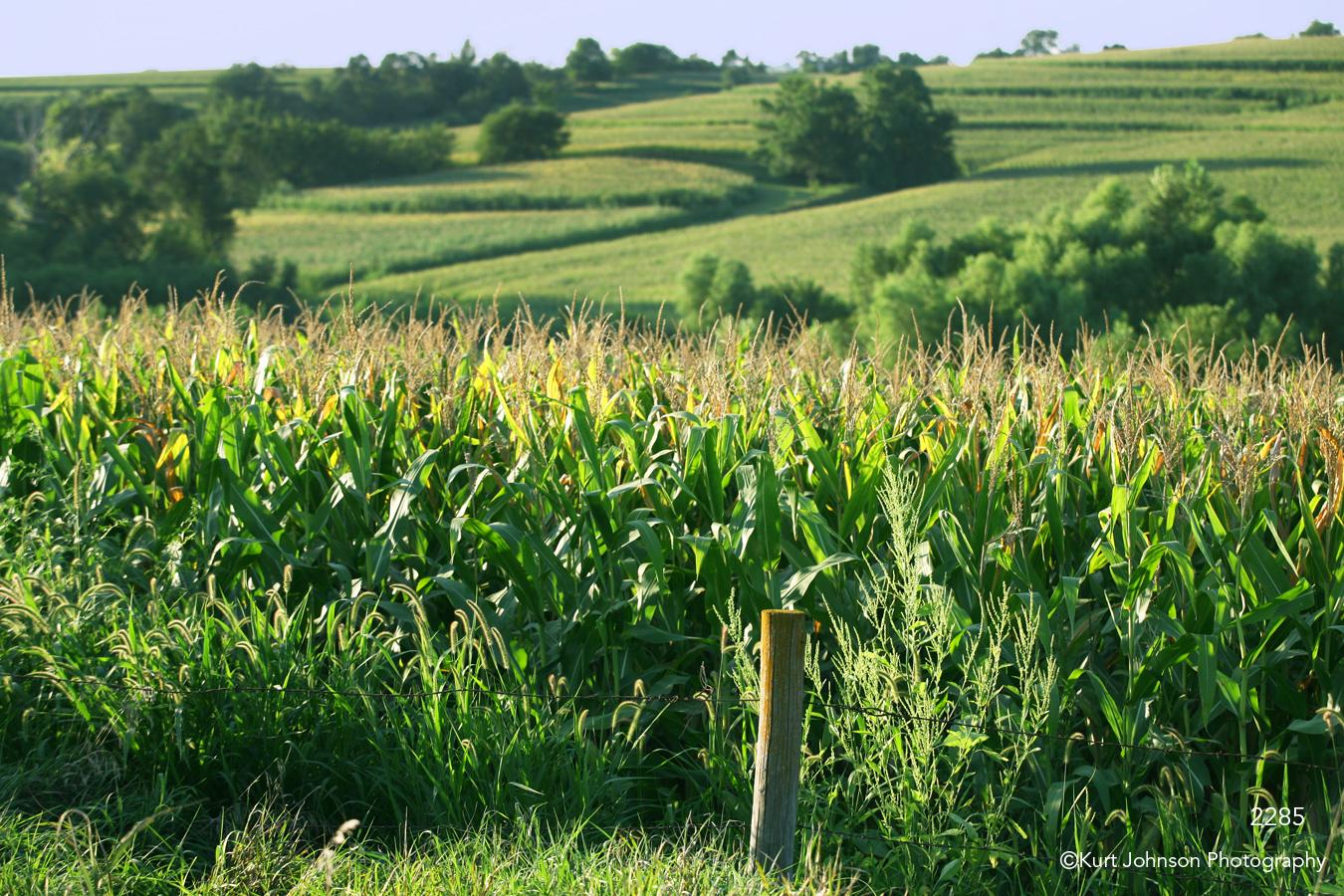 landscape fields crops corn rural fence