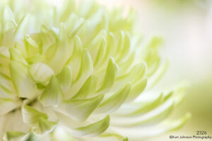flower close up details white yellow petals abstract