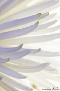flower petals white details texture abstract