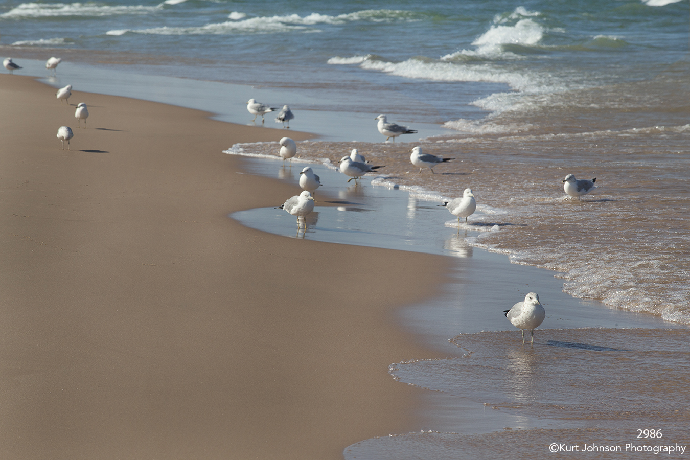 waterscape landscape ocean shore sand clouds sky wildlife birds seagull waves water