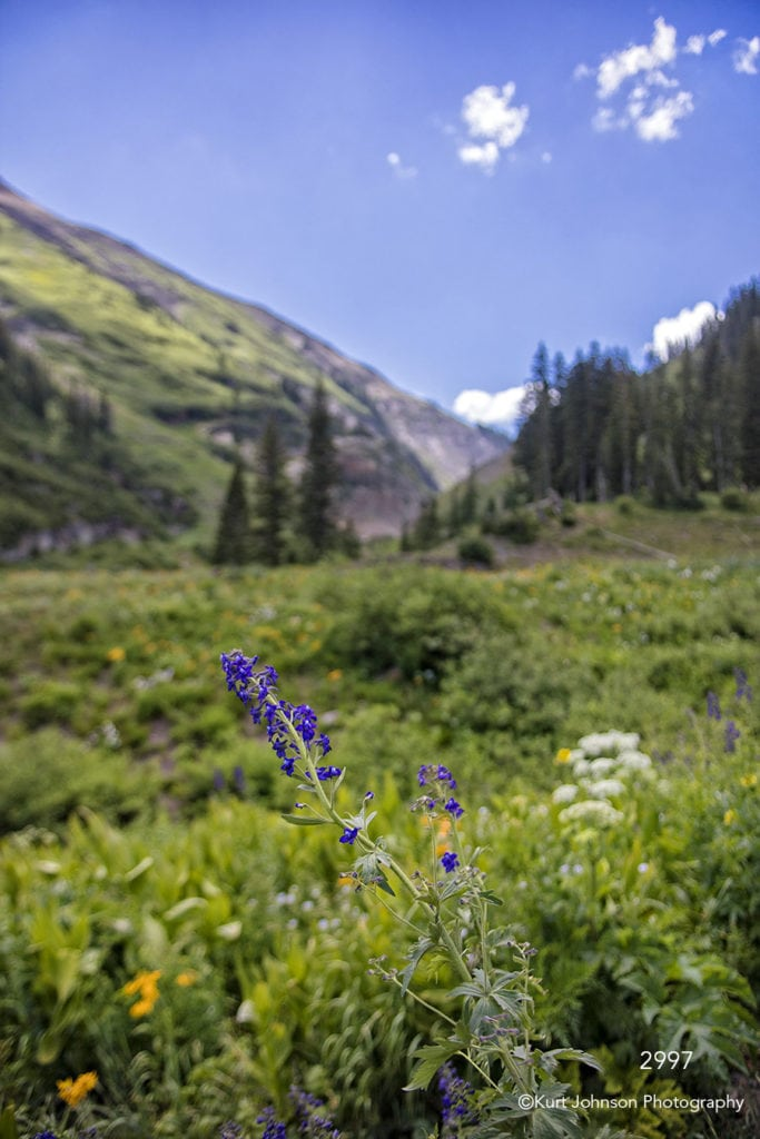 landscape mountains grasses field pine trees purple flower