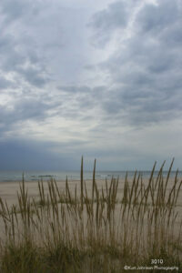 waterscape grasses sand beach shore clouds ocean sky
