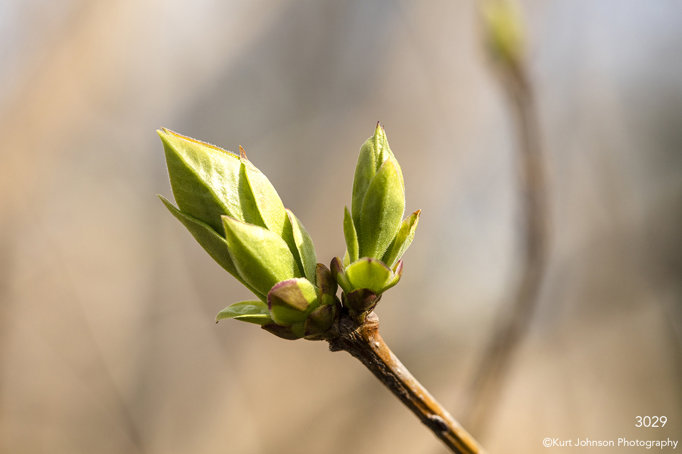 branch green bud leaves sprout