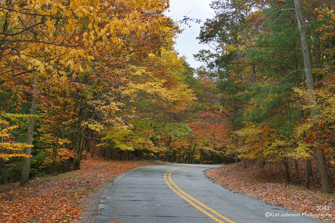 landscape road trees fall color leaves yellow