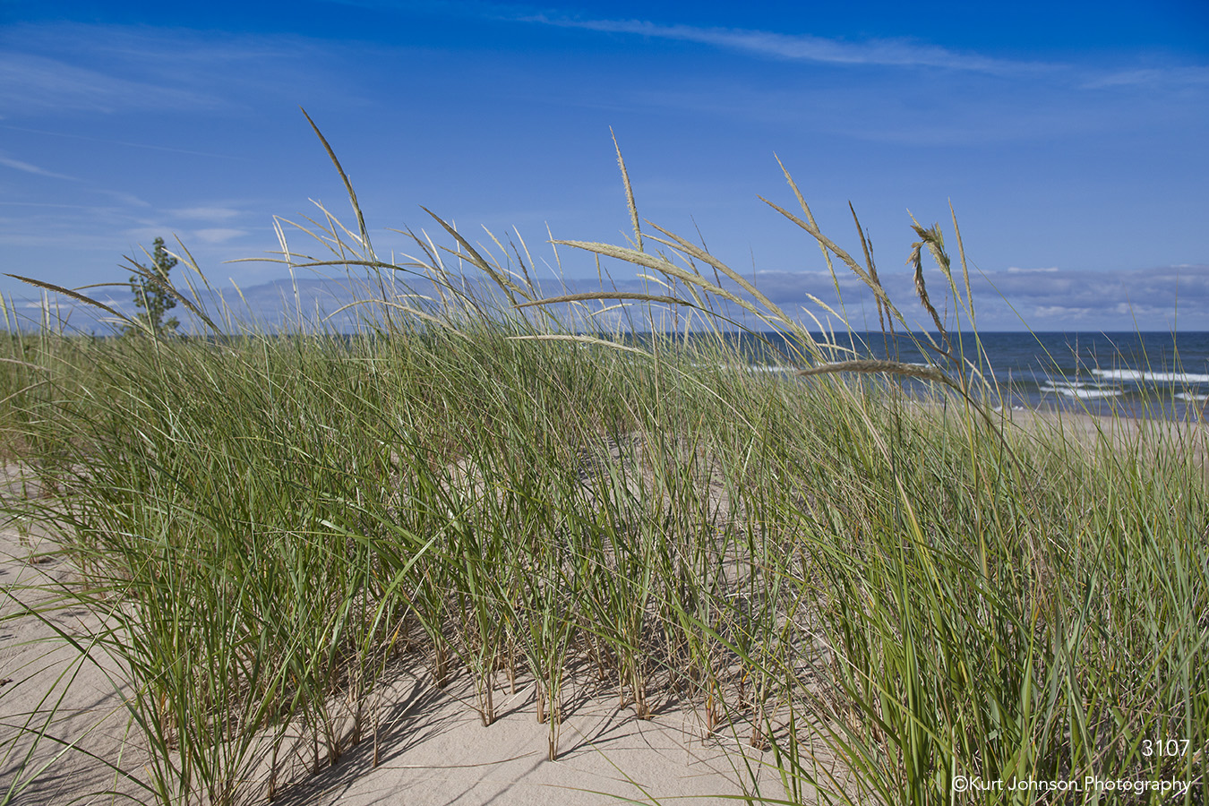 landscape ocean waves grasses sand sky beach