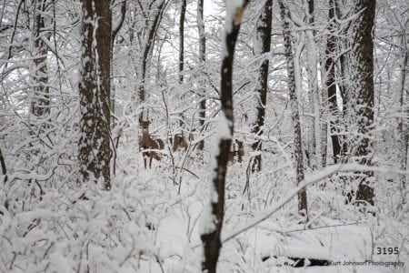 wildlife deer landscape winter snow