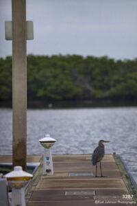 waterscape dock water blue wildlife crane bird trees ocean