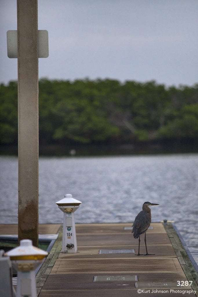 waterscape dock water blue wildlife crane bird trees ocean