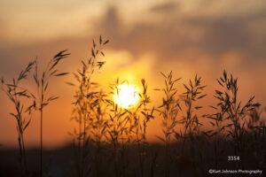 grasses landscape sunset gold orange