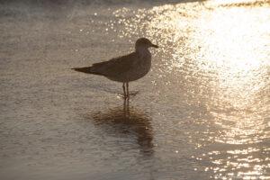 waterscape ocean water sunset bird