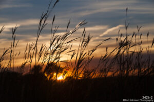 grasses landscape sunset gold orange blue