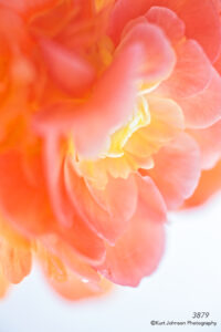 flower orange still life close up detail texture abstract petals