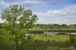 landscape water grasses clouds pond trees