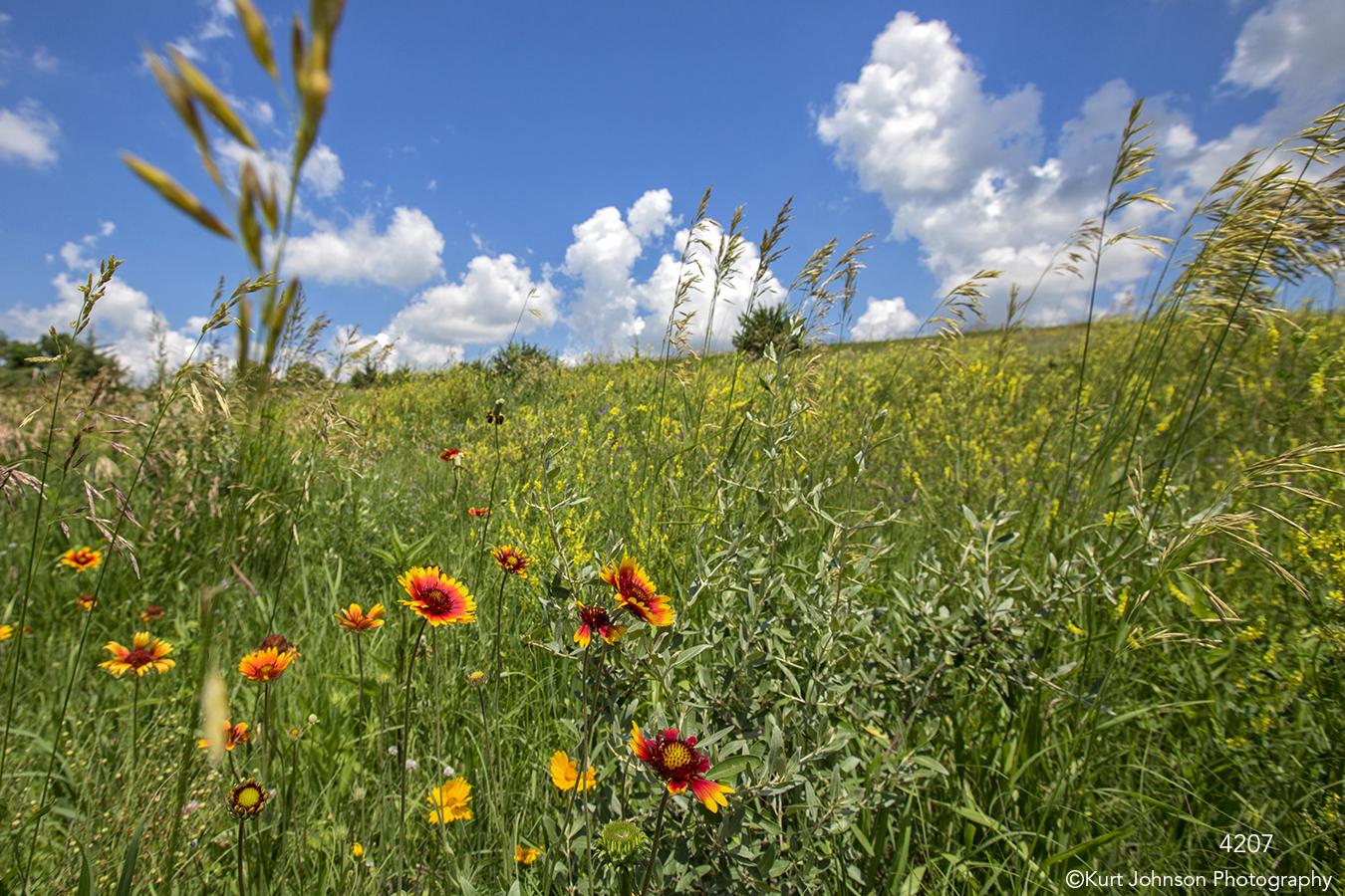 field flowers grasses clouds landscape