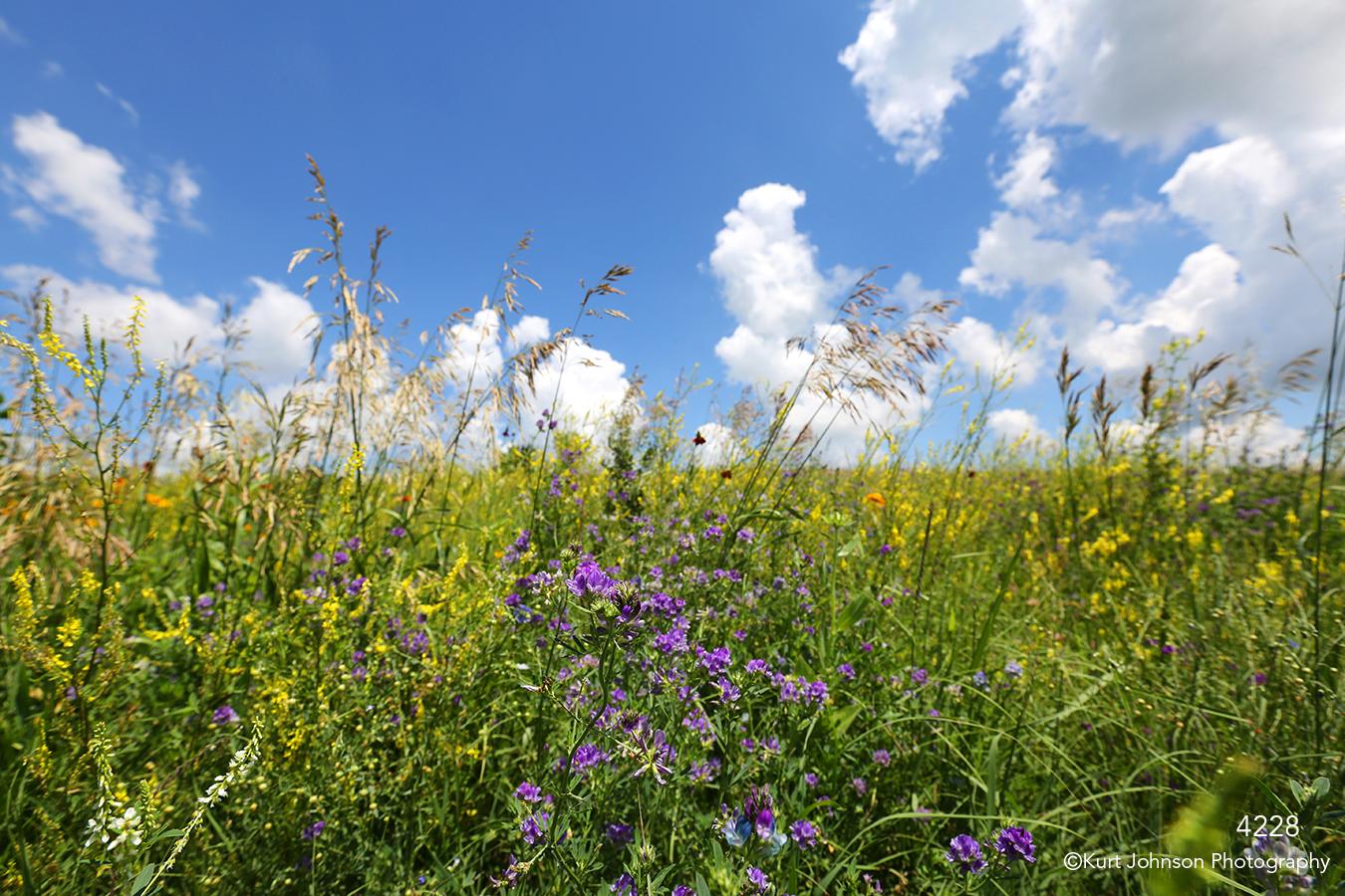 landscape grasses midwest field clouds sky green flowers purple