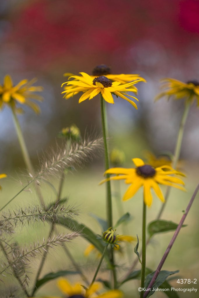 yellow flowers grasses