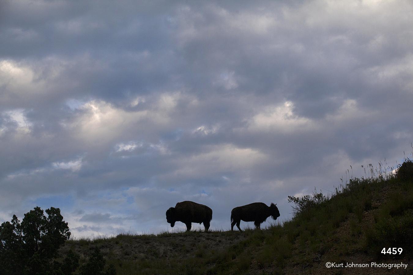 landscape clouds sunset clouds dakota buffalo wildlife