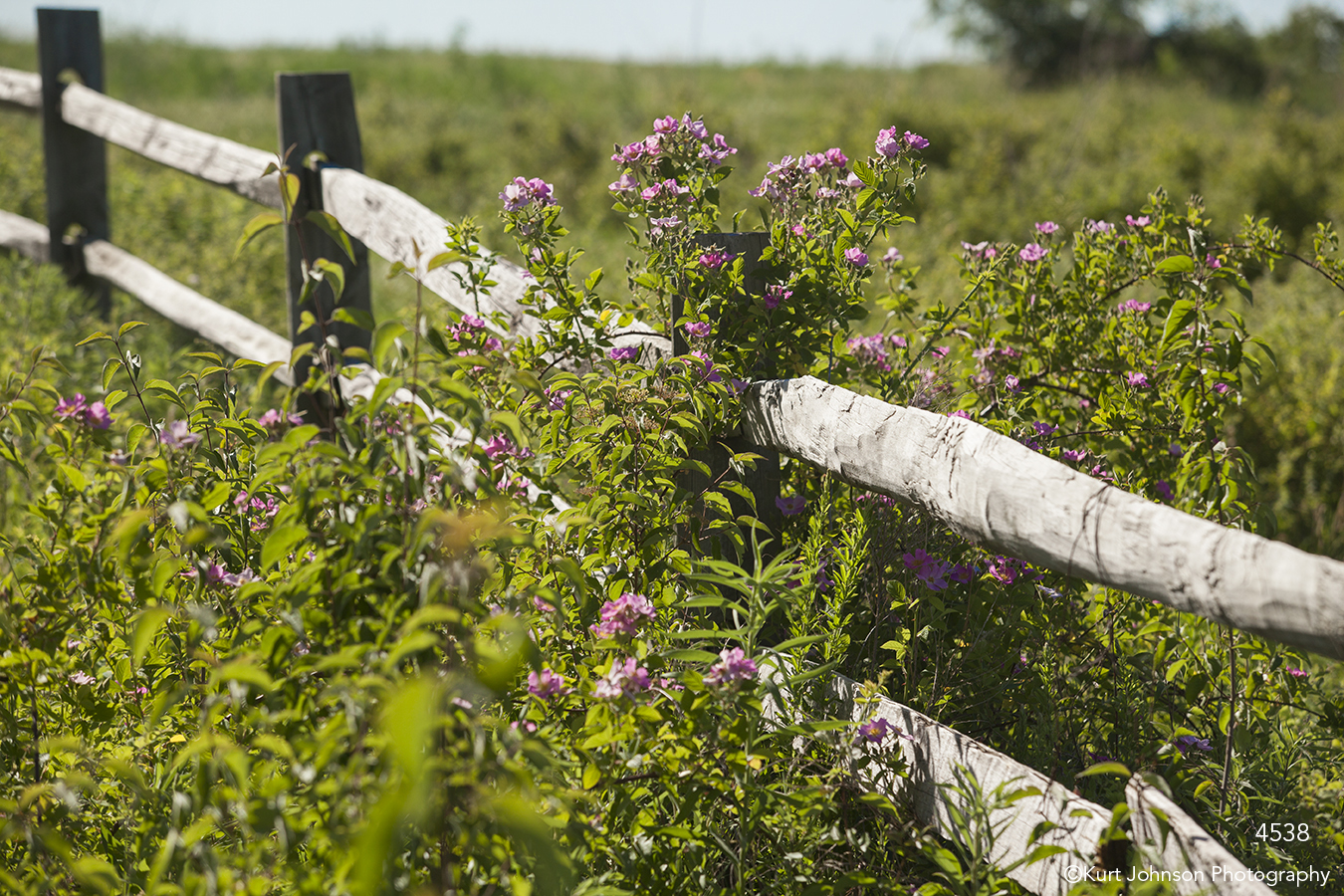 landscape fence flowers pink green grasses midwest