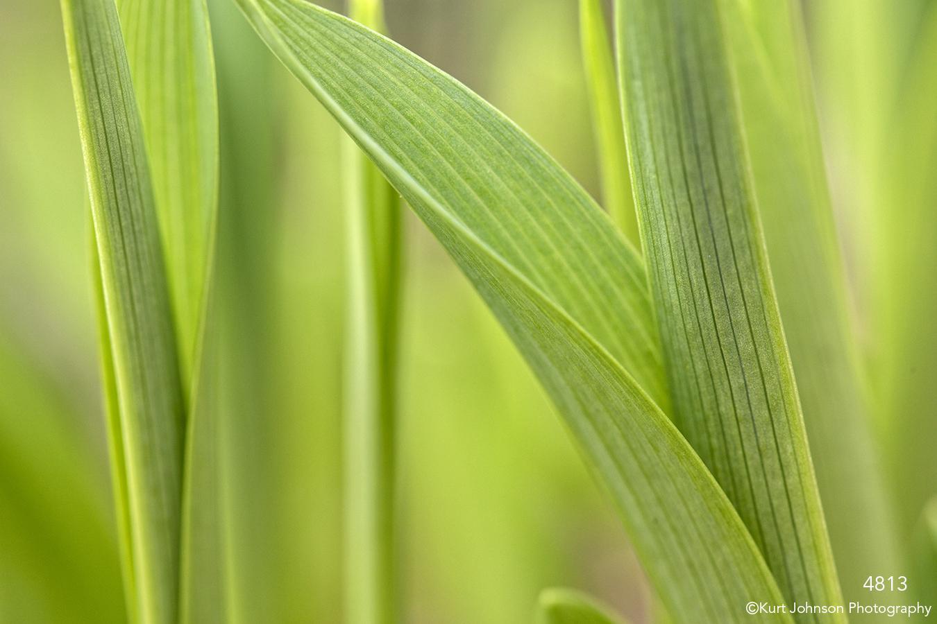 grasses green detail close up texture