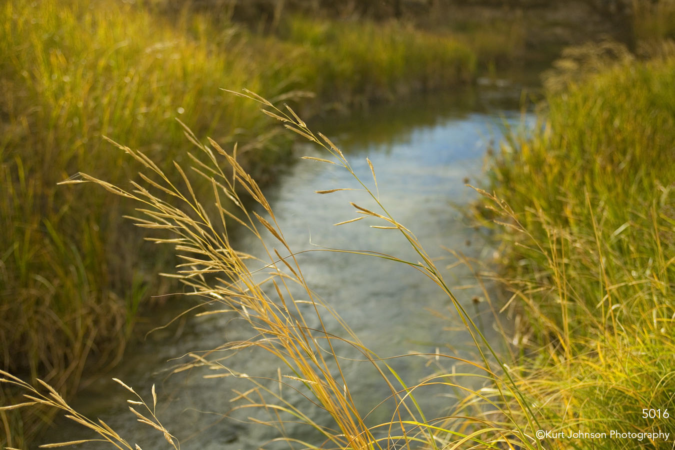 landscape stream grasses water yellow gold