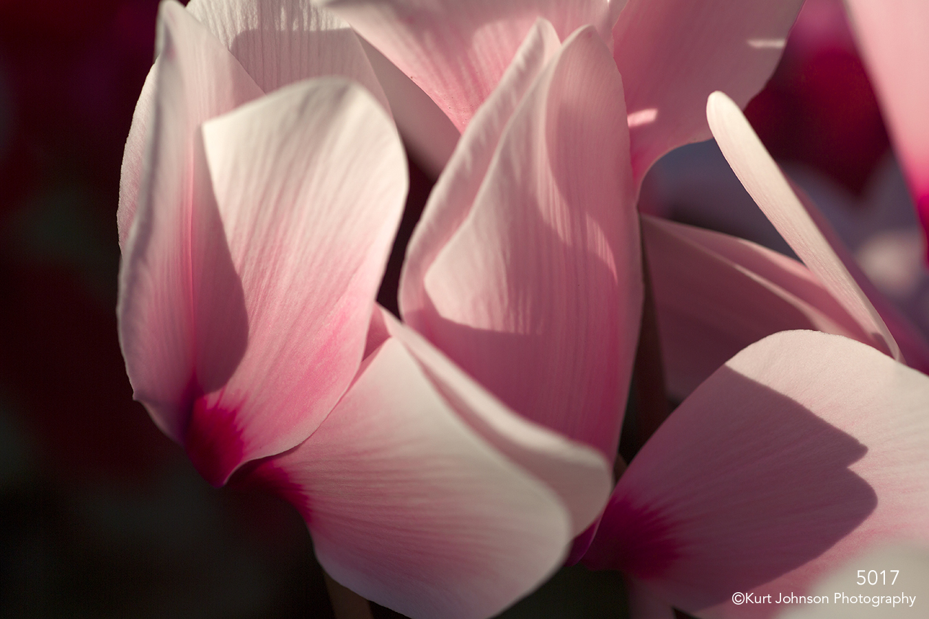 flower pink petals texture abstract details close up