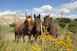 wildlife horses grasses landscape clouds mountains