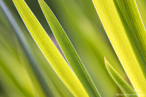 grasses green yellow detail texture