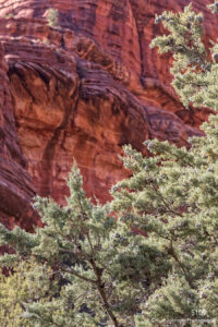 landscape desert red rocks trees green