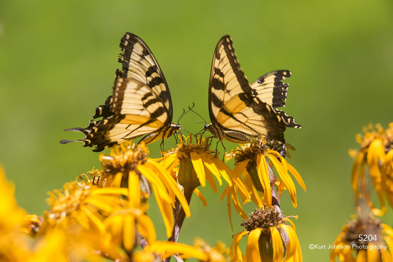wildlife flowers yellow butterfly butterflies