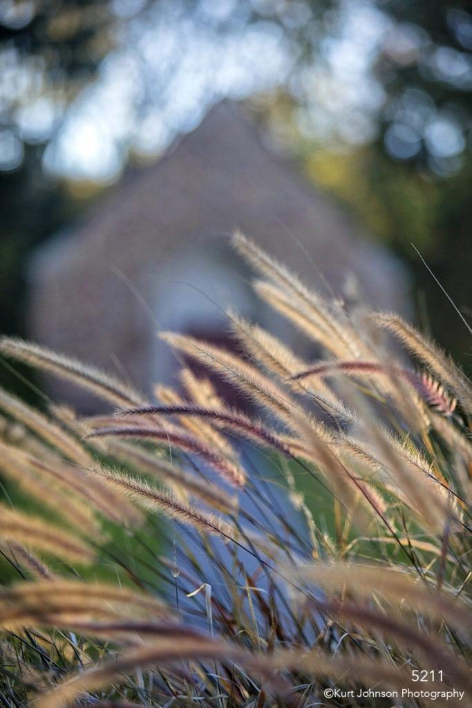landscape grasses earthtones