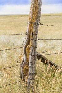 landscape grasses rural fence post earthtones