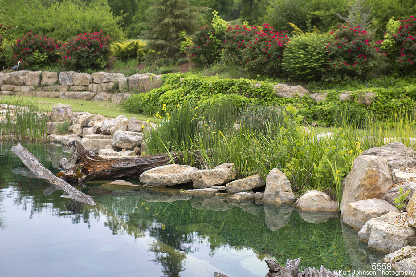waterscape landscape stream rocks grasses