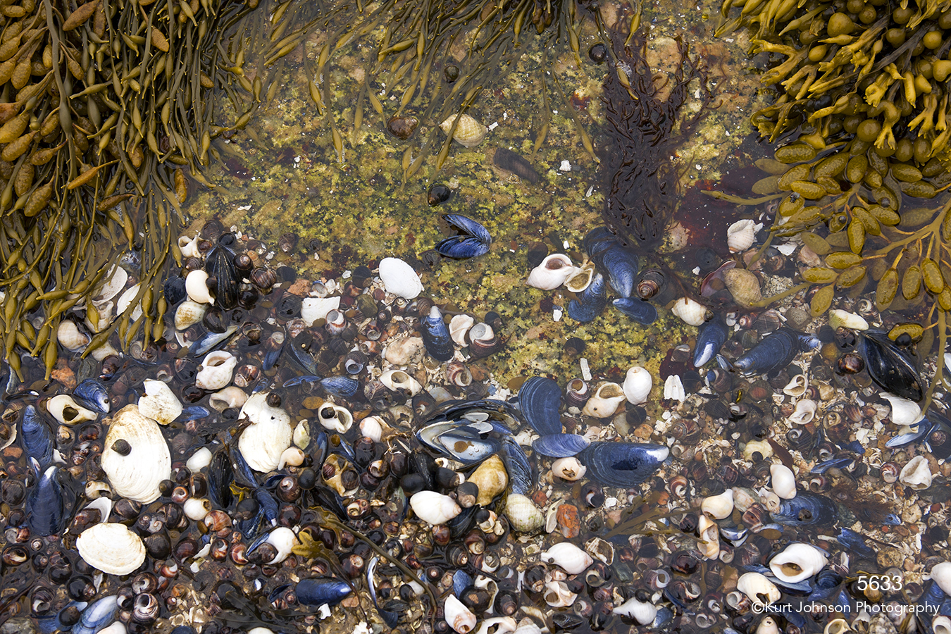 waterscape shells rocks grasses ocean sea water earthtones