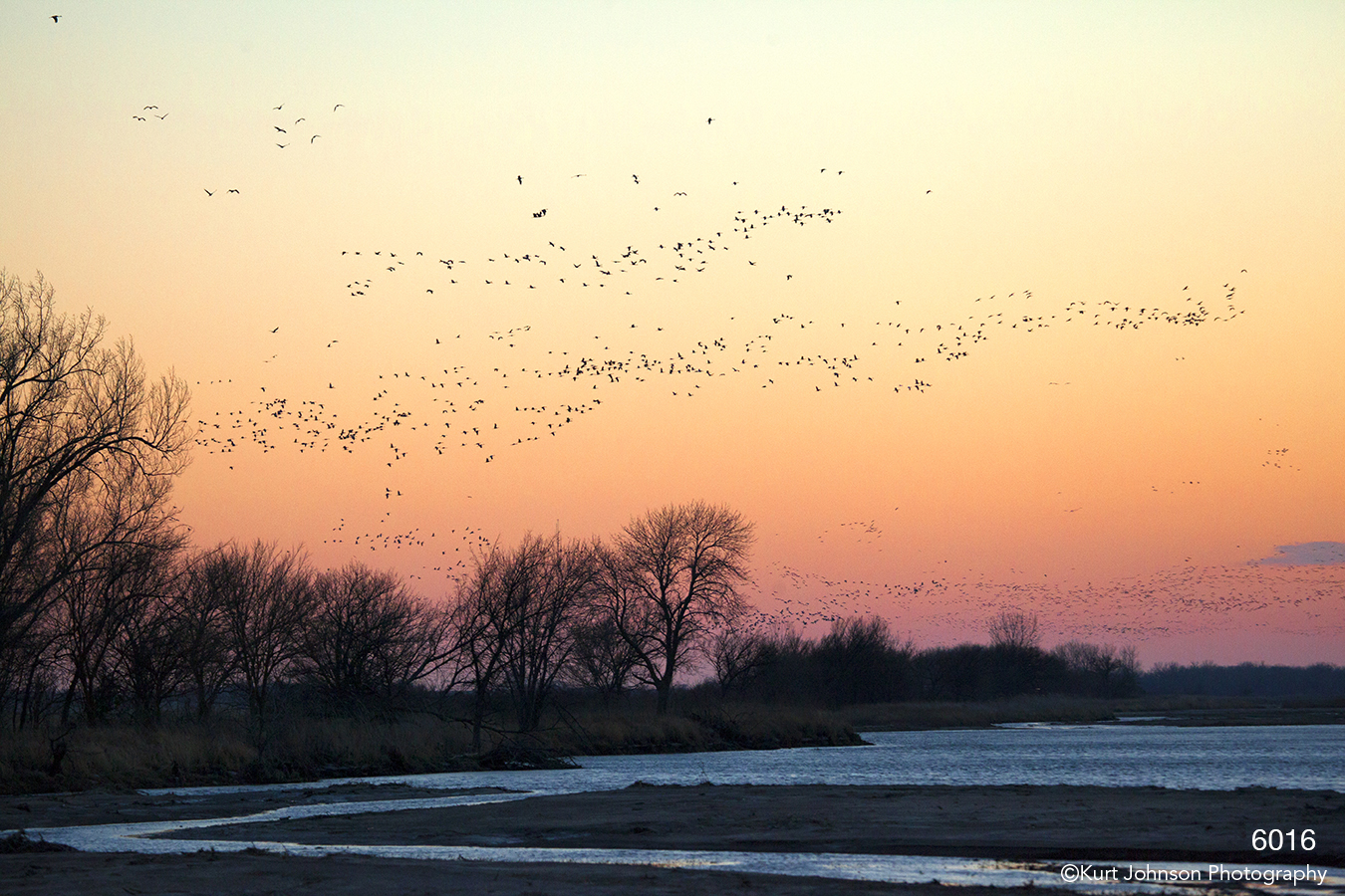 landscape sunset cranes birds wildlife nebraska water river pink
