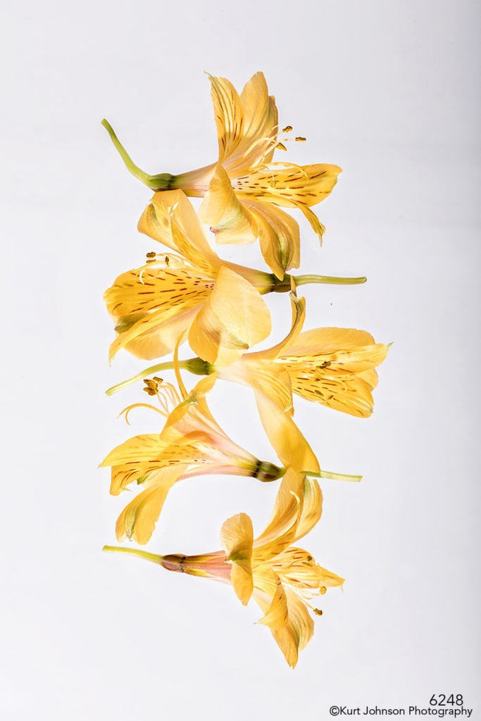 flowers abstract still life orange yellow lily