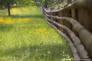 landscape flowers fence yellow forest