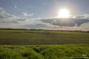 landscape crops field light sunset clouds green grasses rural