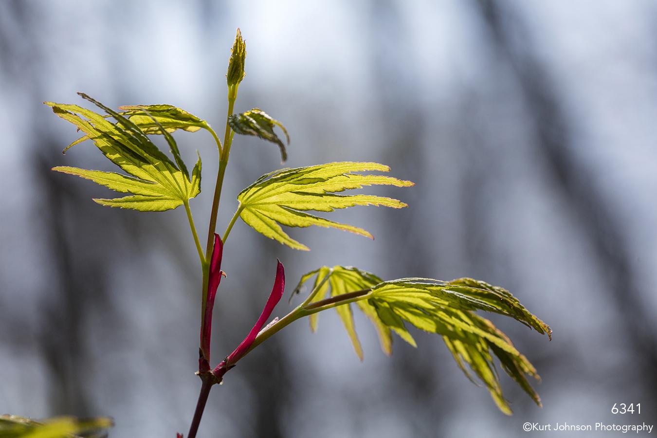 leaves green branch leaf green